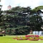 Lustgarten mit Libanonzedern im Schlosspark Bad Homburg