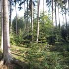 Wald-Panorama