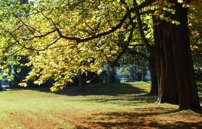Herbst im Bad Homburger Kurpark