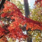 Farbenspiel in Rot