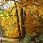 Goldener November ;)