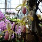 Orchideen-Ausstellung im Frankfurter Palmengarten
