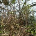 Palmengarten - Trockene Tropen