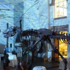 Nacht der Museen 2012 - Senckenberg