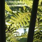 Tropicarium - Nebelwald