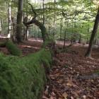 Ein umgefallener und mit Moos bewachsener Baumstamm