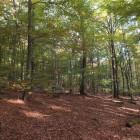 Ein Buchenwald im Herbst
