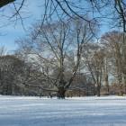 Der erste Schnee des Jahres glitzert in der Wintersonne