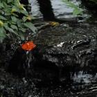 Künstlicher Wasserlauf im Palmenhaus