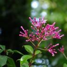 Blüten im Tropicarium