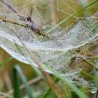 Spinnennetz in der Herbstwiese