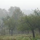 Herbstliche Apfelbäume im Kirdorfer Feld