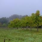 Herbst im Kirdorfer Feld